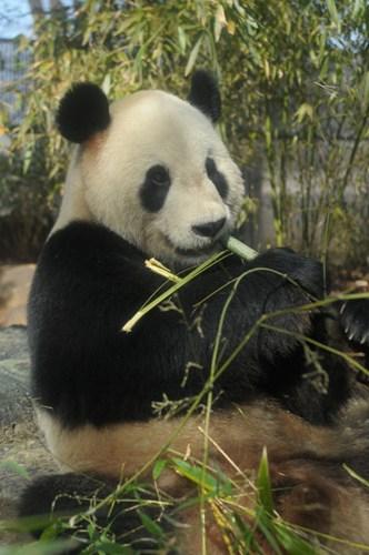【パンダを見に行こう!】上野動物園入園券付宿泊プラン≪和洋食ブッフェ朝食付≫
