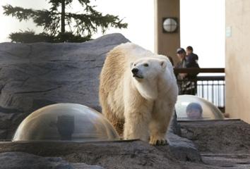 ■ファミリープラン■カバの百吉(ももきち)が大人気♪旭山動物園+朝食バイキング+山頭火ラーメン