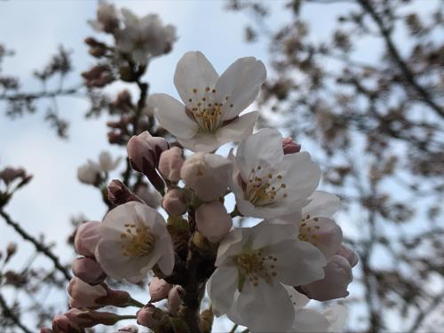 【4月・インターネット予約限定】朝食付プラン☆本格コーヒーが味わえるCafeチケット付き
