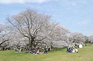 新緑の季節~春のお花見・散策プラン~12:00L/O付き≪お部屋代のみ≫