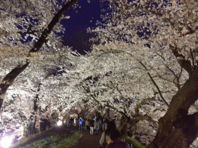 春のお得プラン♪【室数・期間限定】【素泊まり】