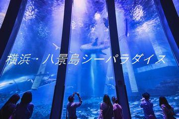 横浜・八景島シーパラダイス★アクアミュージアムプラン