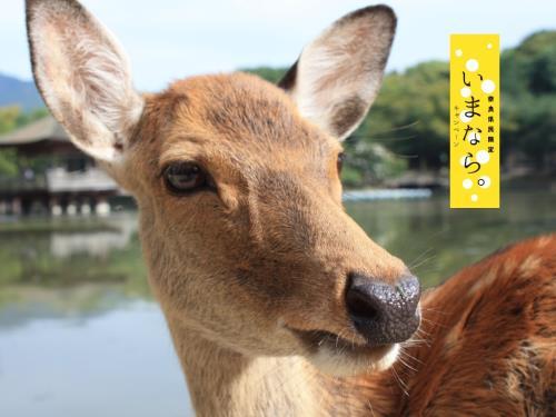 【奈良県民限定】いまなら。キャンペーン割引対象 4大特典付宿泊プラン